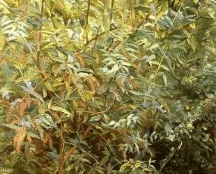 Сад, Ноттинг Хилл Гейт — Люсьен Фрейд