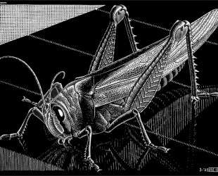 Grasshopper — Мауриц Корнелис Эшер