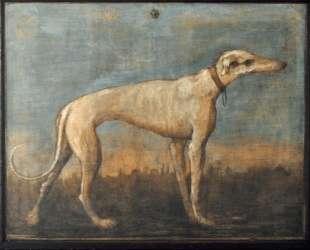 Greyhound — Джованни Доменико Тьеполо