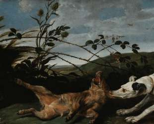 Greyhound Catching a Young Wild Boar — Франс Снейдерс