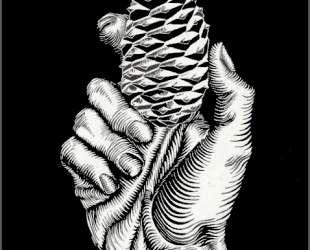 Hand with Fir Cone — Мауриц Корнелис Эшер