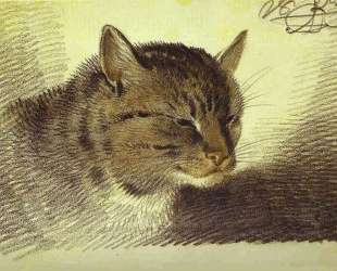 Head of a Cat — Александр Орловский