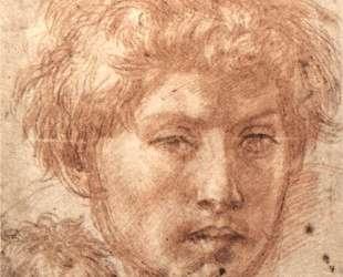 Head of a Young Man — Андреа дель Сарто