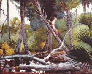 In the jungle, Florida — Уинслоу Хомер