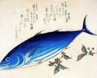 Katsuwonus pelamis — Хиросиге