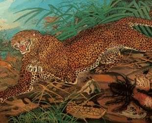 Leopard — Антонио Лигабуэ