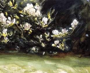 Magnolias — Джон Сингер Сарджент