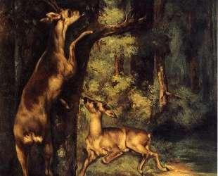 Олень и олениха в лесах — Гюстав Курбе