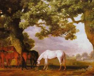 Mares and Foals in a Wooded Landscape — Джордж Стаббс