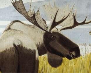 Moosehorn State Park — Алекс Кац