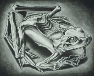 Mumified Frog — Мауриц Корнелис Эшер
