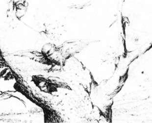Гнездо сов — Иероним Босх