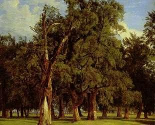 Old elms in Prater — Фердинанд Георг Вальдмюллер