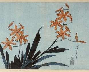 Orange orchids — Кацусика Хокусай