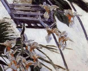 Orchids — Гюстав Кайботт