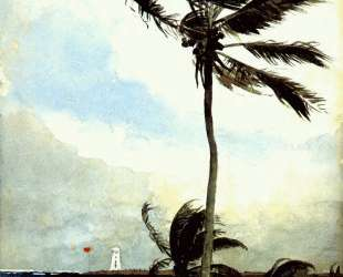 Palm tree, Nassau — Уинслоу Хомер