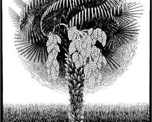 Palm Tree — Мауриц Корнелис Эшер