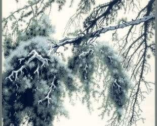 Pine Branch — Эйвинд Эрл