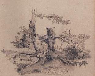 Сосны, прилегающие к корню части стволов — Алексей Саврасов