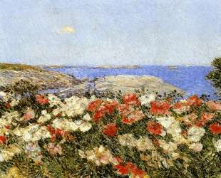 Poppies on the Isles of Shoals — Чайльд Гассам