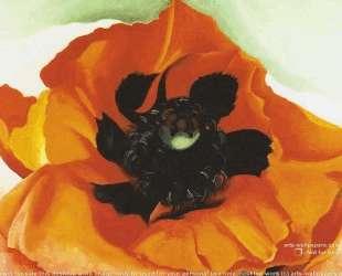 Poppy 4 — Джорджия О'Киф
