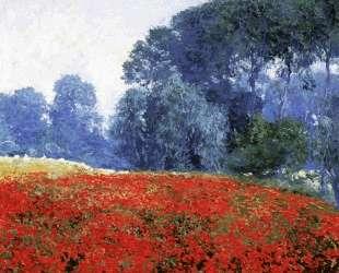 Poppy Field — Ги Роуз
