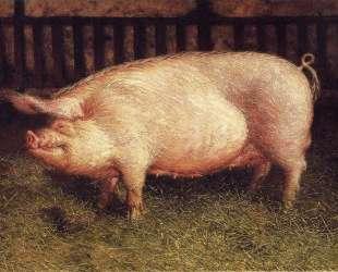 Portrait of Pig — Джейми Уайет