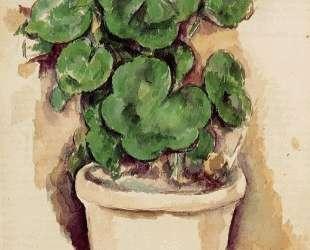 Pot of Geraniums — Поль Сезанн