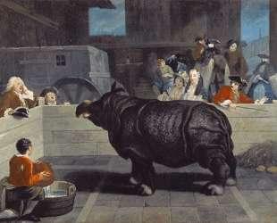 Носорог в Венеции — Пьетро Лонги