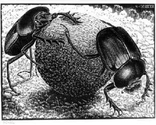 Scarabs — Мауриц Корнелис Эшер