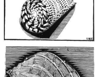 Sea Shells — Мауриц Корнелис Эшер