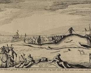 Sperm whale on the beach of Noordwijk — Эсайас ван де Вельде