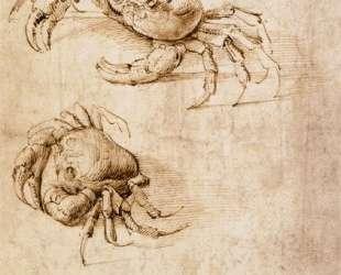 Studies of crabs — Леонардо да Винчи