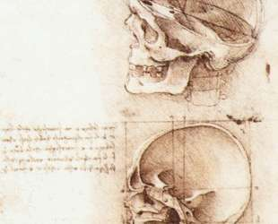 Studies of human skull — Леонардо да Винчи