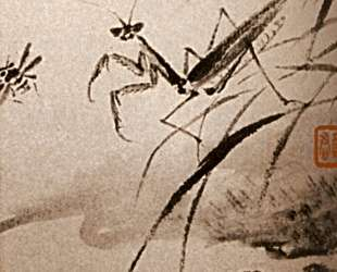 Studies of insects, Mante — Шитао