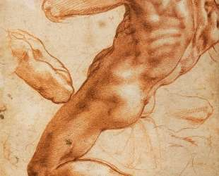 Study for an ignudo — Микеланджело