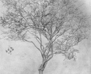Study of a Lemon Tree — Фредерик Лейтон