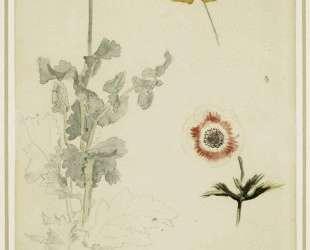 Зарисовка цветка — Эжен Делакруа