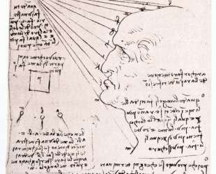 Study of the effect of light on a profile head (facsimile) — Леонардо да Винчи