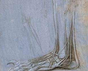 The anatomy of a foot — Леонардо да Винчи
