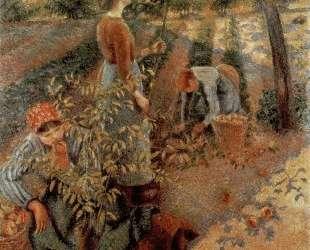 The Apple Pickers — Камиль Писсарро