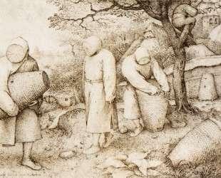 Пасечник и разоритель гнезд — Питер Брейгель Старший