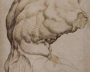 The Belvedere Torso — Мартен ван Хемскерк