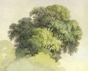 The Crowns of the Trees — Фёдор Васильев