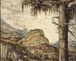 Большая ель — Альбрехт Альтдорфер