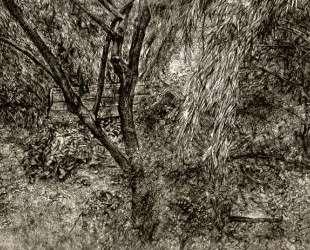 Сад художника — Люсьен Фрейд
