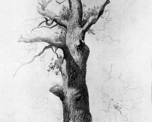 Ствол старого дуба — Фёдор Васильев