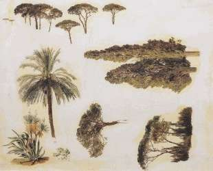 Tree studies from Rome — Фердинанд Георг Вальдмюллер