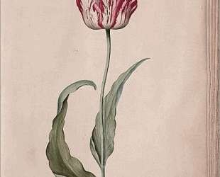 Tulip — Юдит Лейстер