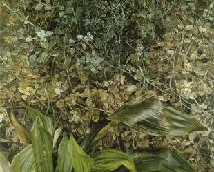 Два растения — Люсьен Фрейд